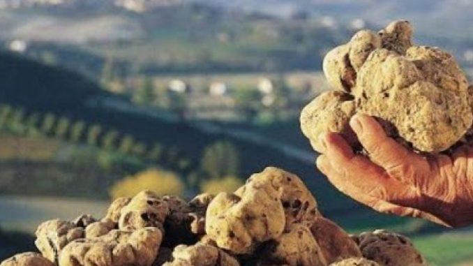 Rare fungi grow in Albania